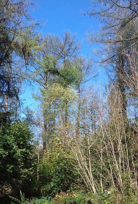 Trees with green leaves against a clear blue sky